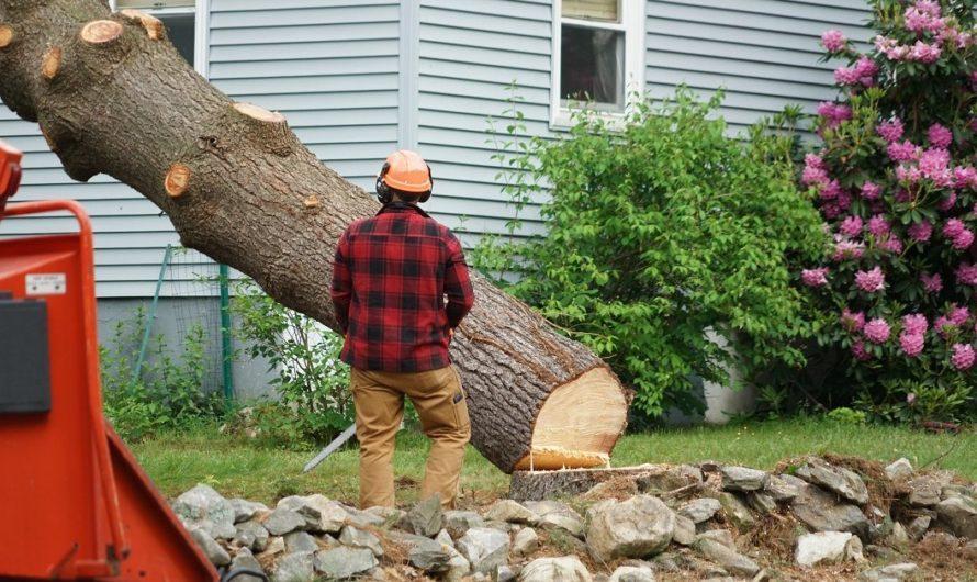 Как заставить соседа убрать дерево, которое затеняет участок